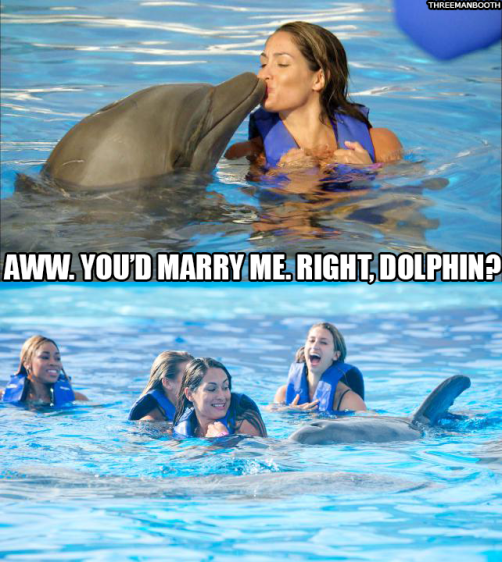 NikkiDolphin_3MB