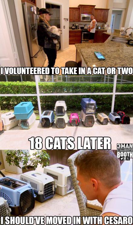 Nattie_Tyson_Cats_3MB